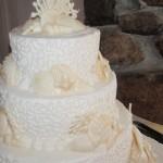12 wedding full coral white choc shells